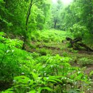 Iranische Buchenwälder und der Steigerwald