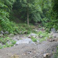 Hyrcanian Forest – Ein unbekannter Wald mit einer Millionen Jahre alten Existenz